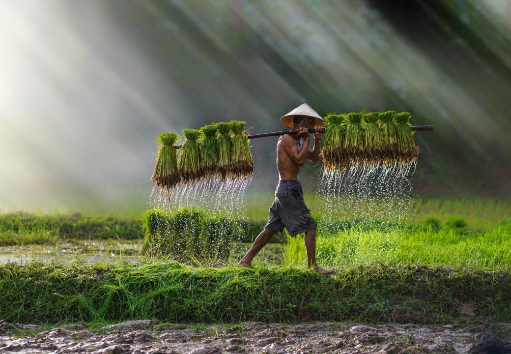 Vietnam, Het land van de rijzende draak