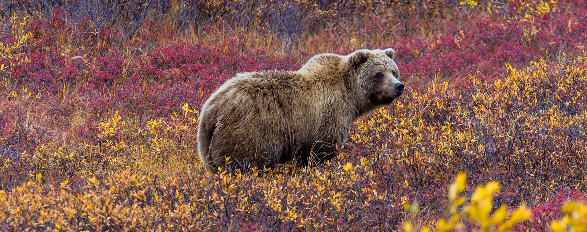 Hoogtepunten van Alaska