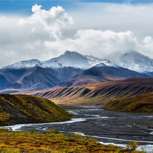 Into the Wild in Denali NP