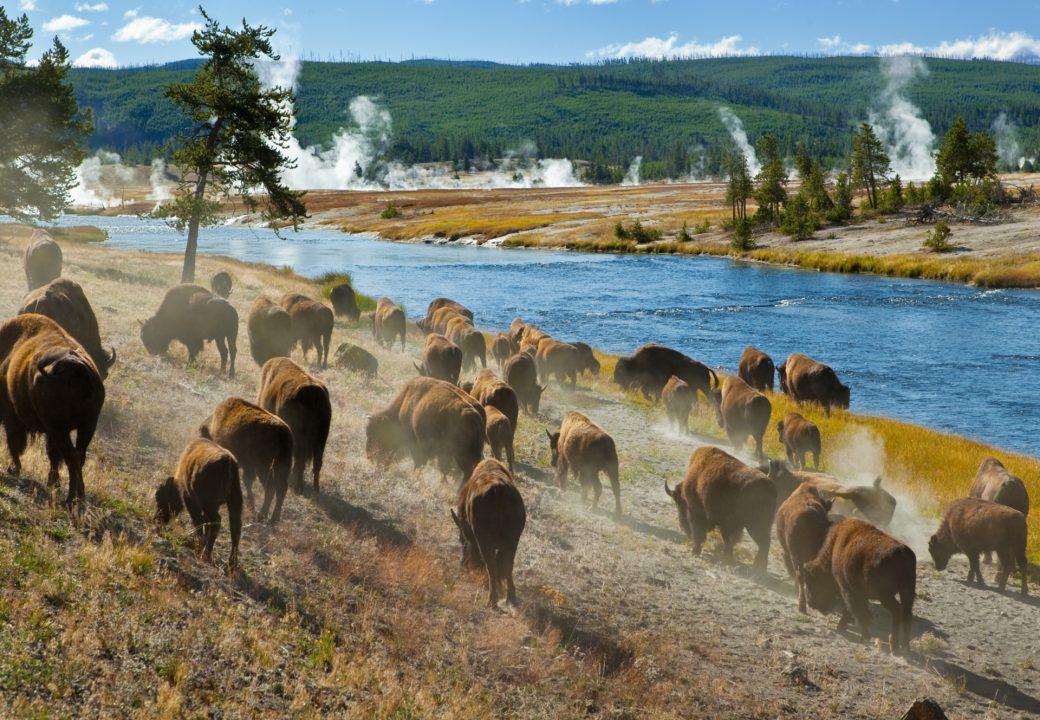 Rocky Mountains & Yellowstone