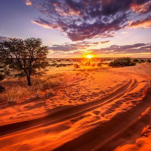 Kalahari bij zonsondergang